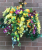 Wall Hanging Baskets with yellow wisterias
